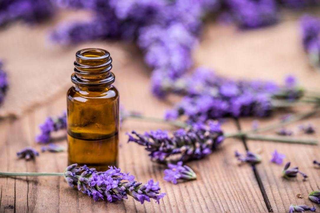 lavender-uses-oil