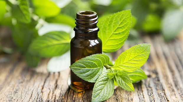 Pepperming-essential-oil-cancer